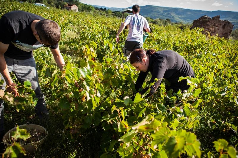 Terre de vins
